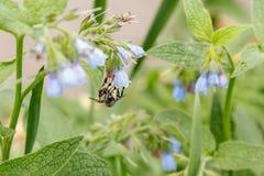Arbustos con las flores serenas hermosas en las cuales una avispa de la abeja es si Imágenes de archivo libres de regalías