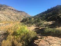 Arbustos da montanha Imagem de Stock Royalty Free