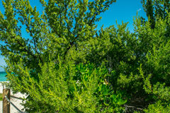 Arbustos da praia Foto de Stock