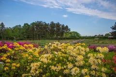 Arbustos de flores coloridas brillantes en un fondo del cielo azul Fotografía de archivo
