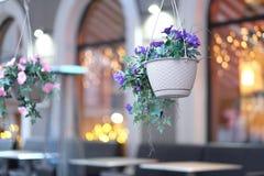 Arbustos de flores en cestas de la ejecución Foto de archivo