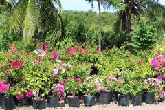 Arbustos de florescência ao longo da estrada para a venda fotos de stock royalty free