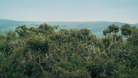 Arbustos de la aulaga en el viento metrajes