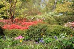 Arbustos de la azalea fotografía de archivo libre de regalías