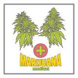 Arbustos de la marijuana Medica planos stock de ilustración