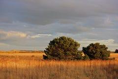 Arbustos de la puesta del sol Imágenes de archivo libres de regalías