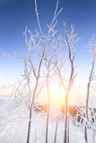 Arbustos de las ramas cubiertos con la escarcha mullida Fotografía de archivo