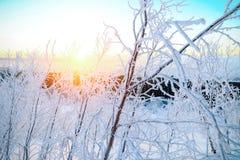 Arbustos de las ramas cubiertos con la escarcha mullida Imagen de archivo libre de regalías