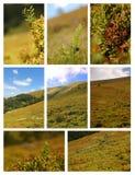 Arbustos de uva-do-monte Fotografia de Stock