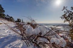 Arbustos debajo de la nieve imagen de archivo