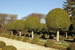 Arbustos del callejón del boj Imagenes de archivo