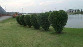 Arbustos del corte del corazón en lado del lago Foto de archivo libre de regalías