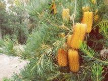 Arbustos del embotellamiento Imagen de archivo libre de regalías