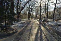 Arbustos del invierno Foto de archivo libre de regalías