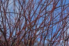Arbustos del invierno Imagen de archivo