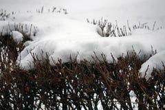 Arbustos del invierno Fotografía de archivo