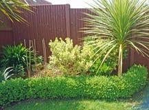 Arbustos del jardín Foto de archivo libre de regalías