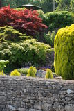 Arbustos del jardín fotos de archivo
