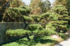 Arbustos del jardín del estilo japonés Imágenes de archivo libres de regalías
