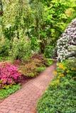 Arbustos del rododendro en jardín del verano Imagen de archivo libre de regalías