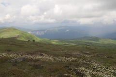 Arbustos del rododendro en un valle de la montaña Foto de archivo