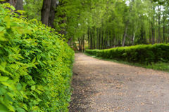 Arbustos del té del parque del callejón Fotografía de archivo libre de regalías