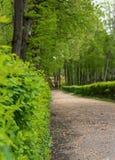 Arbustos del té del parque del callejón Fotografía de archivo