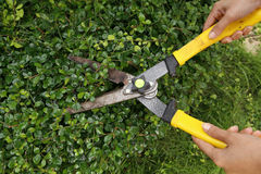 Arbustos do aparamento com tesouras do jardim fotografia de stock