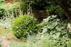 Arbustos do buxo no projeto do jardim da paisagem Imagem de Stock
