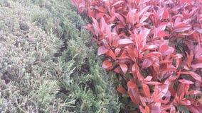 Arbustos do contraste Fotografia de Stock