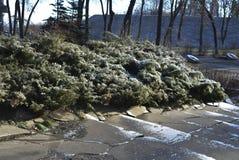 Arbustos do inverno Fotografia de Stock
