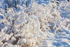 Arbustos do inverno Foto de Stock