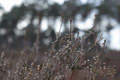 Arbustos do inverno Imagens de Stock
