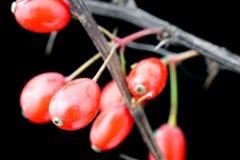 Arbustos do ornamental do feto Foto de Stock Royalty Free