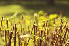 Arbustos do outono Fotografia de Stock Royalty Free