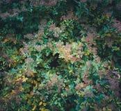 Arbustos do outono Imagem de Stock Royalty Free