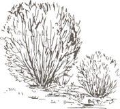 Arbustos do salgueiro com folhas e grama ilustração royalty free