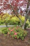 Arbustos e árvores de florescência em Washington Imagens de Stock Royalty Free