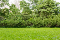 Arbustos e árvores do gramado no parque Fotografia de Stock