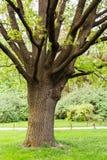 Arbustos e árvores do gramado no parque Imagem de Stock Royalty Free