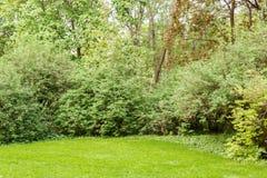 Arbustos e árvores do gramado no parque Foto de Stock Royalty Free
