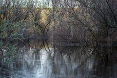 Arbustos e árvores inundados no lago Imagem de Stock