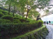 Arbustos e árvores verdes elegantes em kyoto japão imagens de stock
