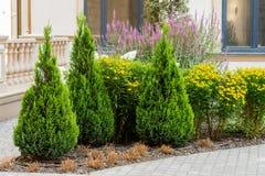 Arbustos e flores no projeto da paisagem foto de stock royalty free
