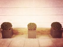Arbustos em seguido Imagem de Stock