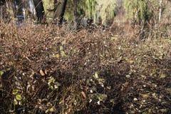 Arbustos em um parc Fotografia de Stock