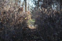 Arbustos em um parc foto de stock royalty free