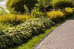 Arbustos en diseño del paisaje Fotos de archivo