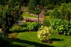 Arbustos en diseño del paisaje Imagenes de archivo