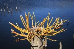 Arbustos en el agua Foto de archivo
